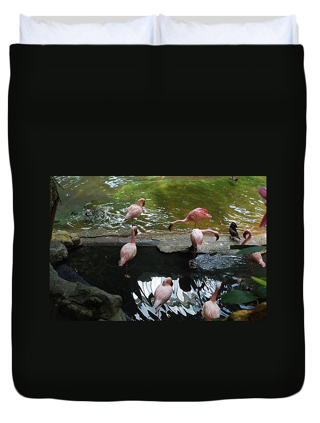 Flamingo Duvet Cover featuring the photograph Flamingoes At The Zoo by Alice Markham