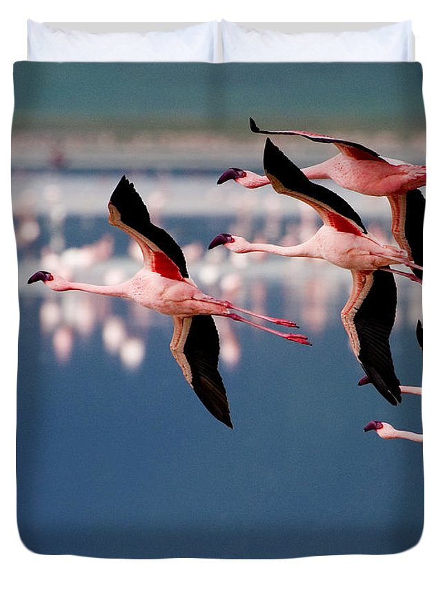 Phoenicopterus Rosens Duvet Cover featuring the photograph Flamingos In Flight-signed by J L Woody Wooden