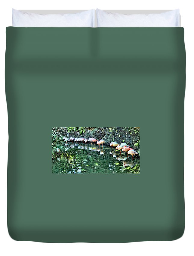 Flamingos Duvet Cover featuring the photograph Flamingos by Nora Martinez