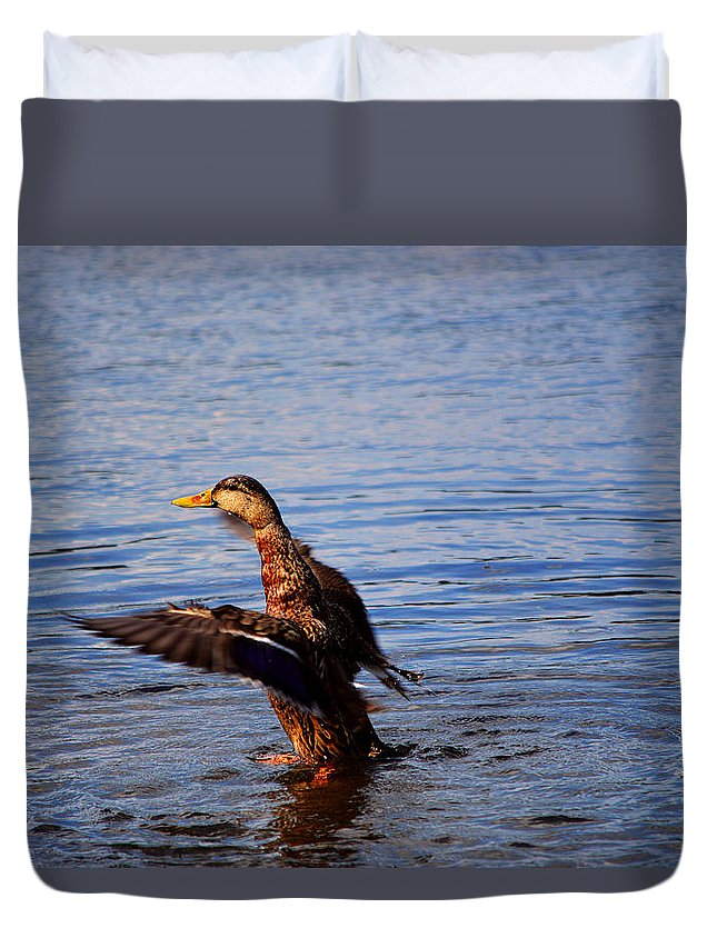 Duck Duvet Cover featuring the pyrography Flap And Splash by Joseph Johns