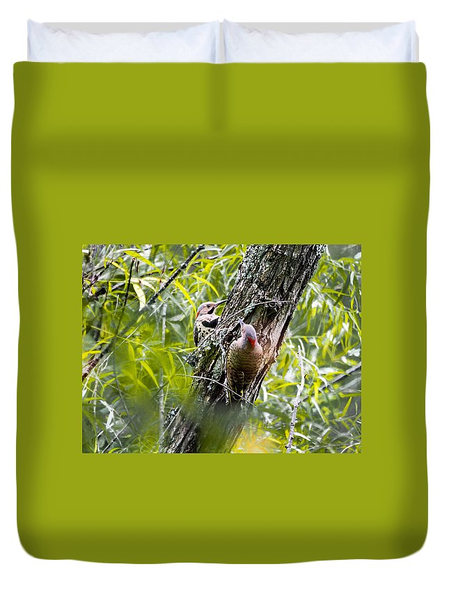 Yellow-shafted Flicker Duvet Cover featuring the photograph Flicker Antics by Paula Ponath