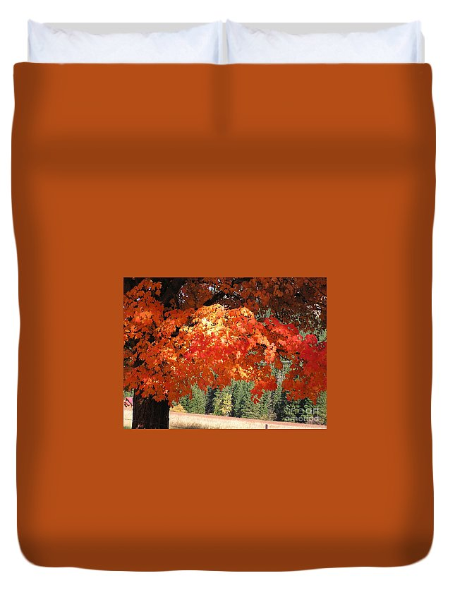 Autumn Photographs Duvet Cover featuring the photograph Flickering Sunlight by Louise Magno