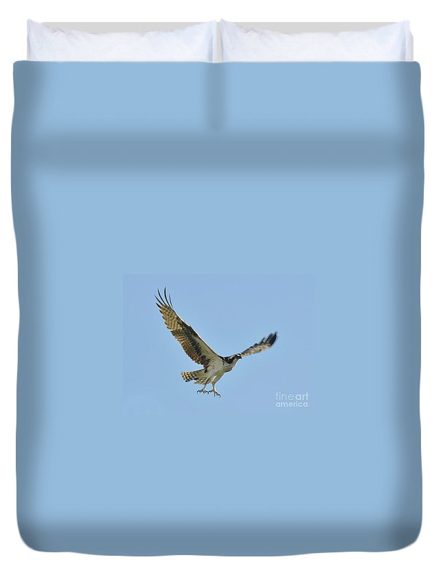 Osprey Duvet Cover featuring the photograph Flight Of The Osprey by David Lee Thompson
