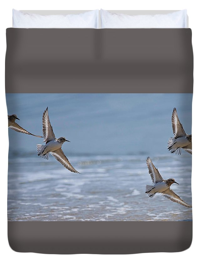 Sanderlings Duvet Cover featuring the photograph Flight Of The Sanderlings by MCM Photography