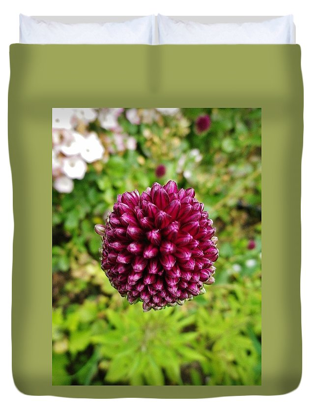 Allium Sphaerocephalon Duvet Cover featuring the photograph Floating Flower Buds Orb by Richard Brookes
