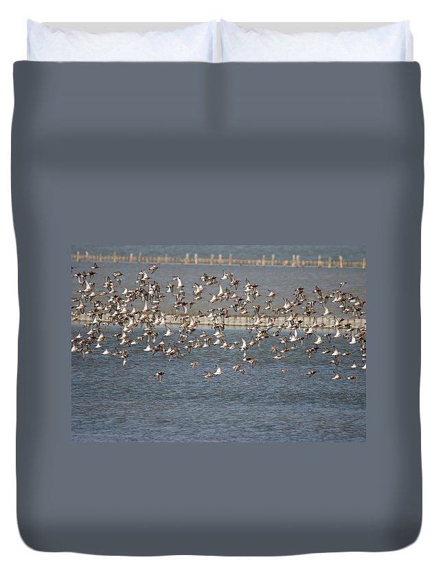 River Life Duvet Cover featuring the photograph Flock Of Birds In Flight by Cliff Norton