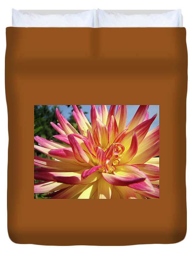 Dahlia Duvet Cover featuring the photograph Floral Art Prints Bright Dahlia Flower Canvas Baslee Troutman by Baslee Troutman
