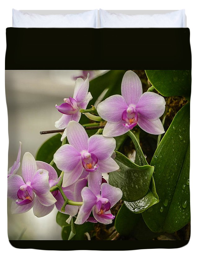 Orchids Duvet Cover featuring the photograph Floral Hangup by Robert Coffey