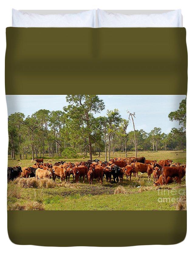 Florida Cracker Cows Duvet Cover featuring the photograph Florida Cracker Cows #1 by Teresa A and Preston S Cole Photography