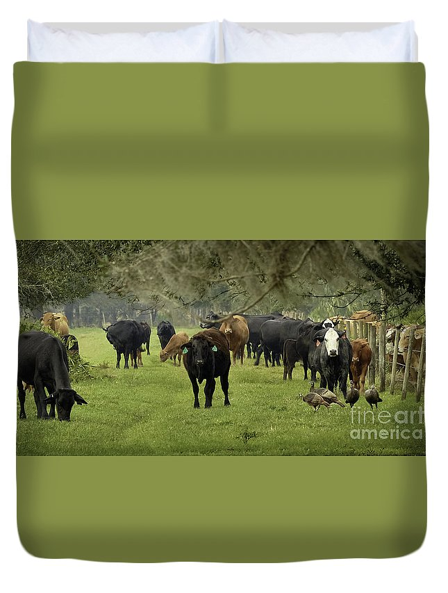 Florida Cracker Cows Duvet Cover featuring the photograph Cracker Cows And Osceola Turkeys #1 by Teresa A and Preston S Cole Photography