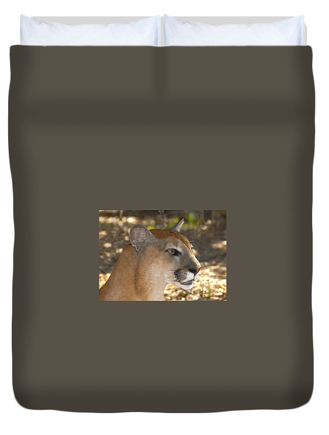 Florida Duvet Cover featuring the photograph Florida Panther by David Lee Thompson