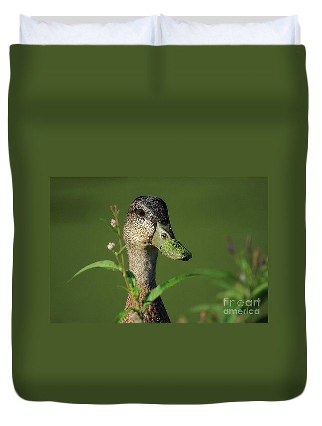 Duck Duvet Cover featuring the photograph Flower Picking by Karol Livote