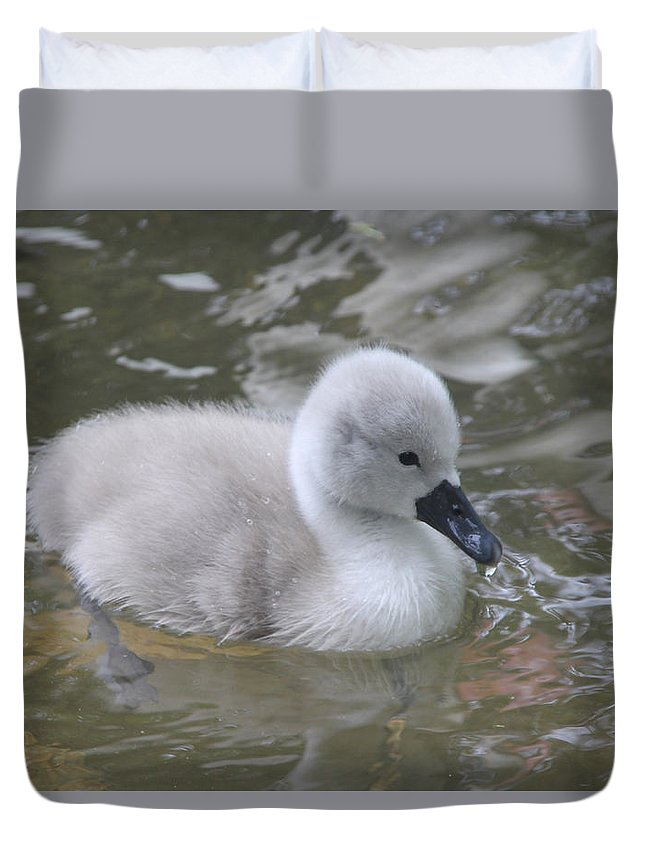 Signet Duvet Cover featuring the photograph Fluffy Signet by Kyle Hillman