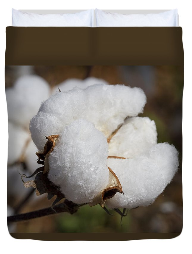 Cotton Duvet Cover featuring the photograph Fluffy White Alabama Cotton by Kathy Clark
