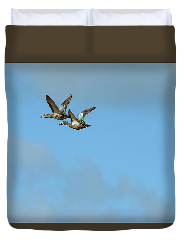 Bird Duvet Cover featuring the photograph Fly Birds 319 by Lawrence Hess