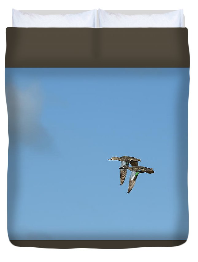 Bird Duvet Cover featuring the photograph Fly Birds 322 by Lawrence Hess