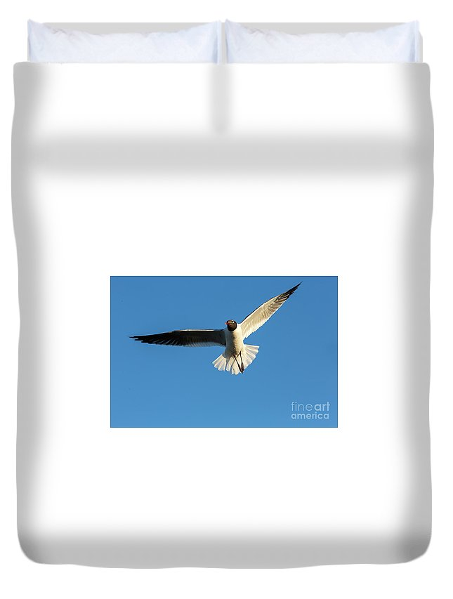 Seagull Duvet Cover featuring the photograph Flying Gull by Rodney Cammauf