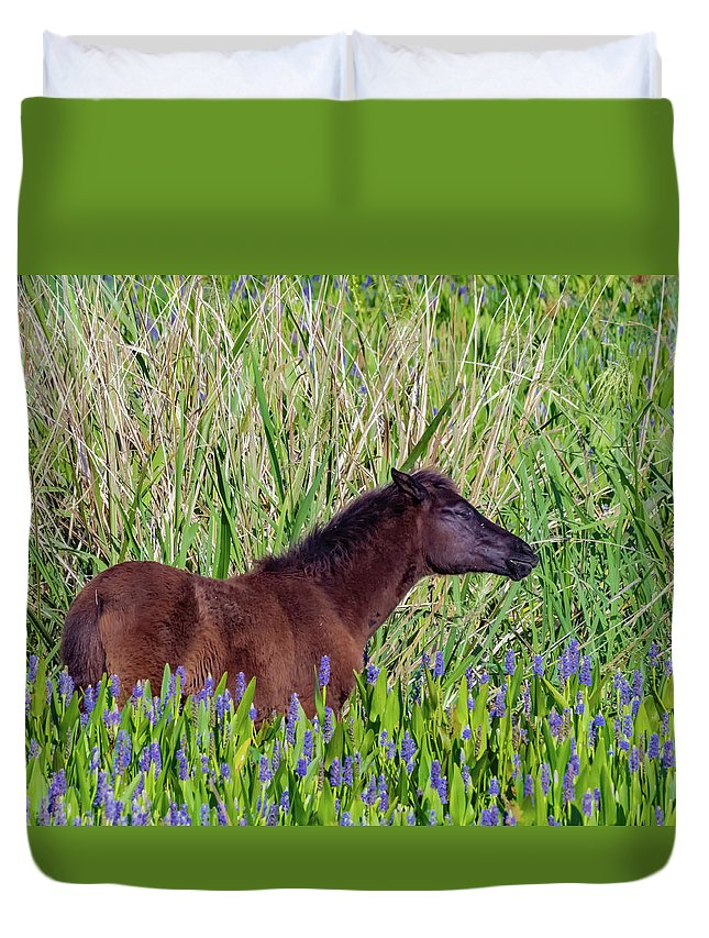 Duvet Cover featuring the photograph Foal Grazing by Joseph Caban