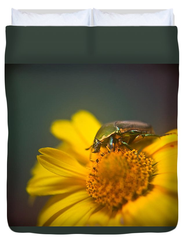 Coleoptera Duvet Cover featuring the photograph Focused June Beetle by Douglas Barnett