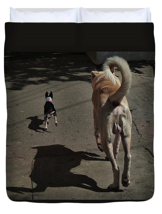 Pomeranian Duvet Cover featuring the photograph Follow Me... by Xueling Zou