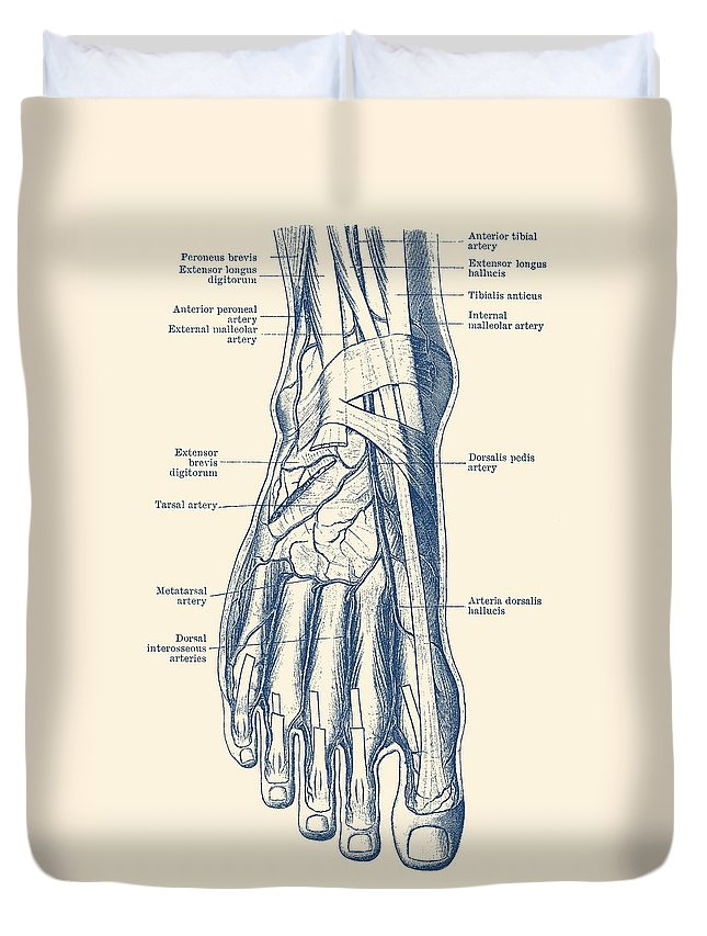 Foot Diagram Human Circulatory System Duvet Cover For Sale By Vintage Anatomy Prints