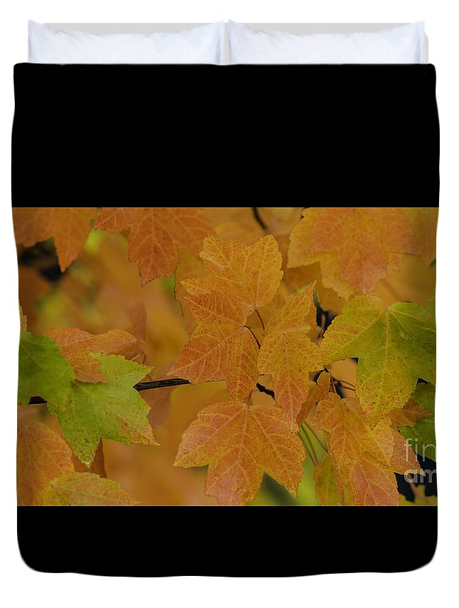 Season Duvet Cover featuring the photograph For Every Season There Is A Color by Nick Boren