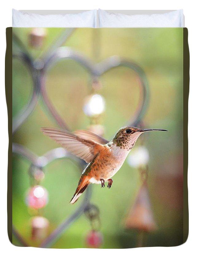 Lynn Bauer - Hummingbirds - Wall Art