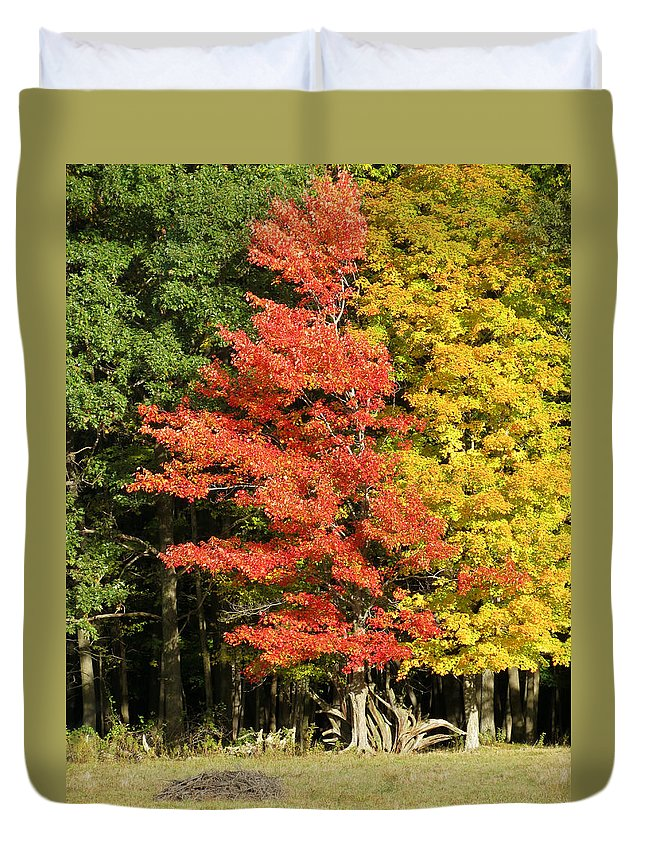 Trees Duvet Cover featuring the photograph Forest Door by Azthet Photography