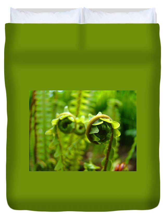 Fern Duvet Cover featuring the photograph Forest Ferns Fine Art Photography Art Prints Baslee Troutman by Baslee Troutman