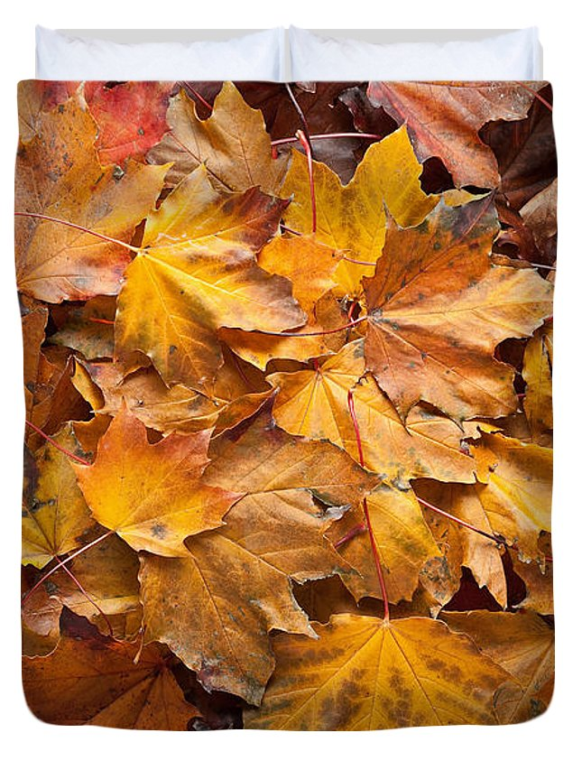 Maple Duvet Cover featuring the photograph Forest Floor by Steve Gadomski
