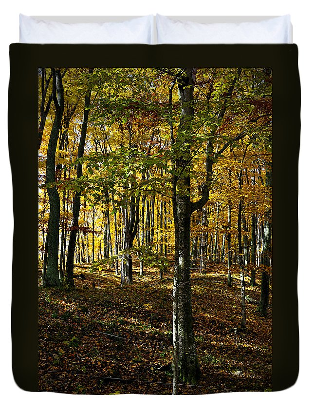 Trees Duvet Cover featuring the photograph Forest Floor Two by Tim Nyberg