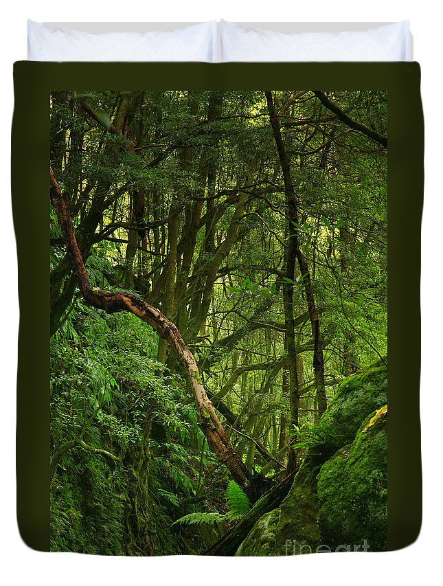 Woodland Duvet Cover featuring the photograph Forest by Gaspar Avila