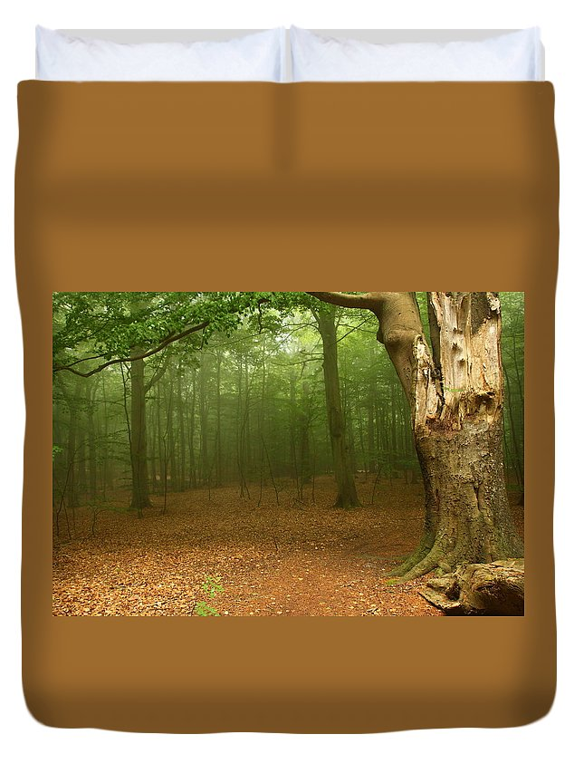 Light Duvet Cover featuring the photograph Forest Light by Heike Hultsch
