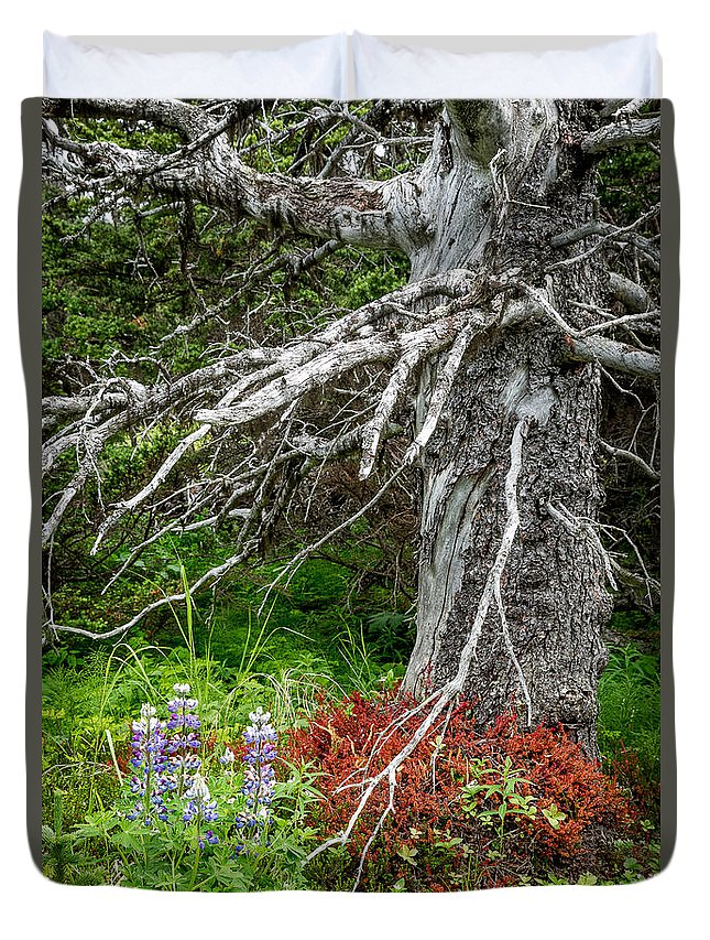 Alaska Duvet Cover featuring the photograph Forest Scene by Tim Newton