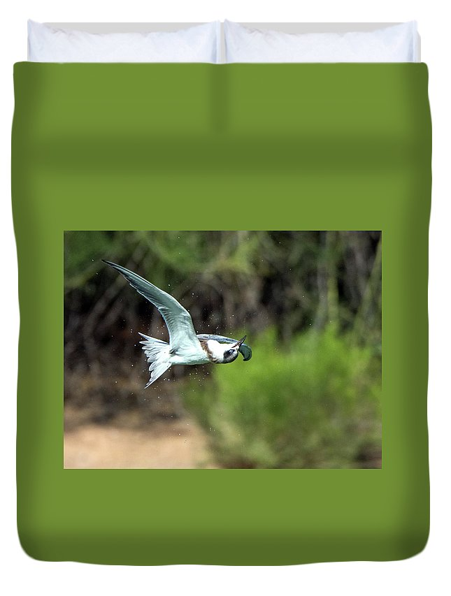 Forster's Duvet Cover featuring the photograph Forster's Tern 5744-092217-1cr by Tam Ryan