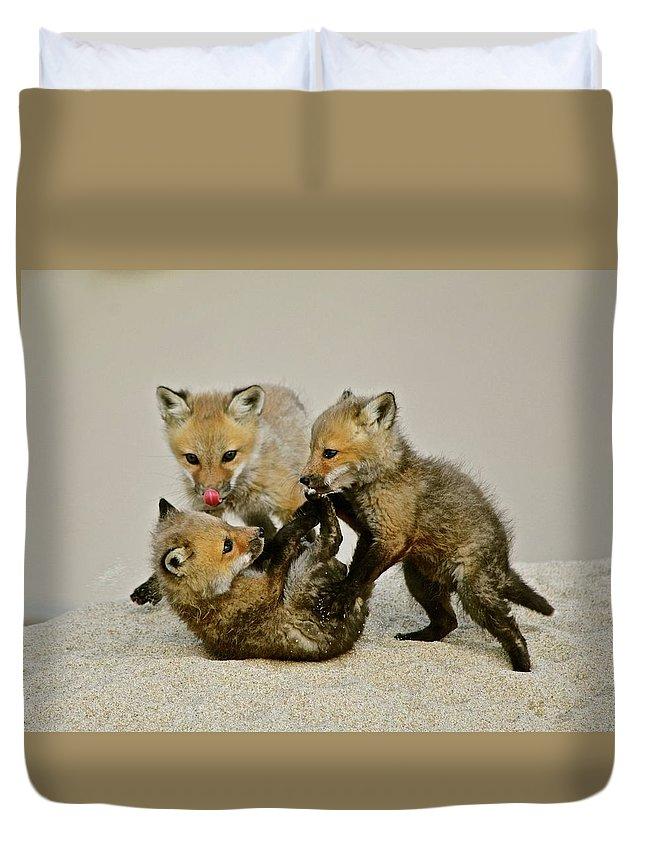 Fox Cubs Duvet Cover featuring the photograph Fox Cubs At Play II by Susan Ballard