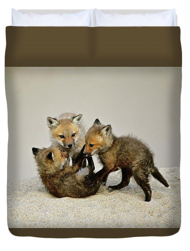 Fox Cubs Duvet Cover featuring the photograph Fox Cubs At Play by Susan Ballard
