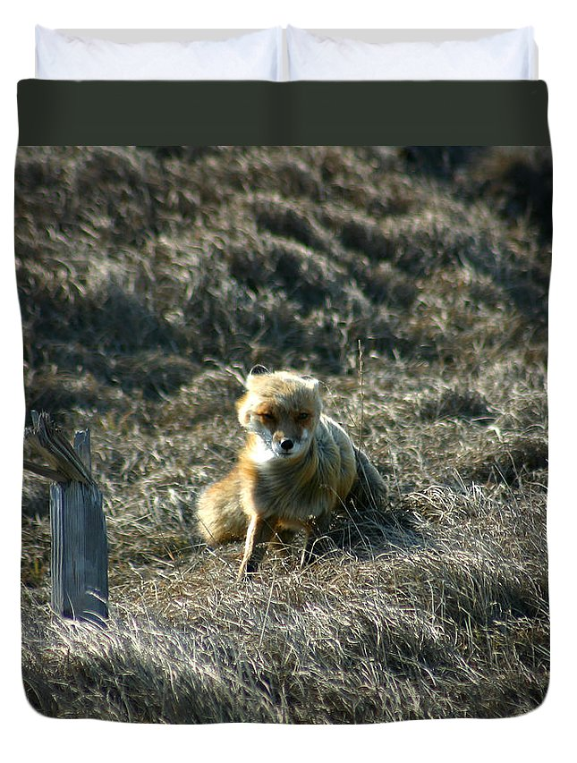 Red Fox Duvet Cover featuring the photograph Fox In The Wind by Anthony Jones