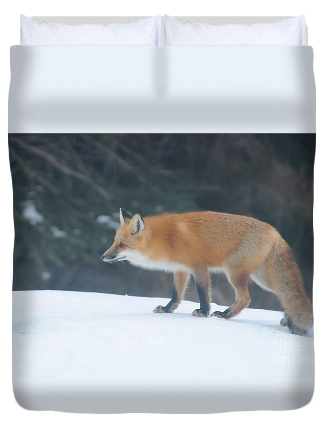 Fox Duvet Cover featuring the photograph Fox On The Prowl by Sandra Updyke