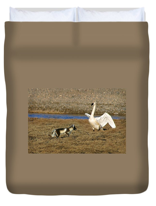 Fox Duvet Cover featuring the photograph Fox Vs Swan by Anthony Jones
