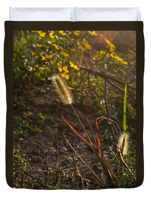 Kentucky Duvet Cover featuring the photograph Foxtail Glowing In Sun by Douglas Barnett