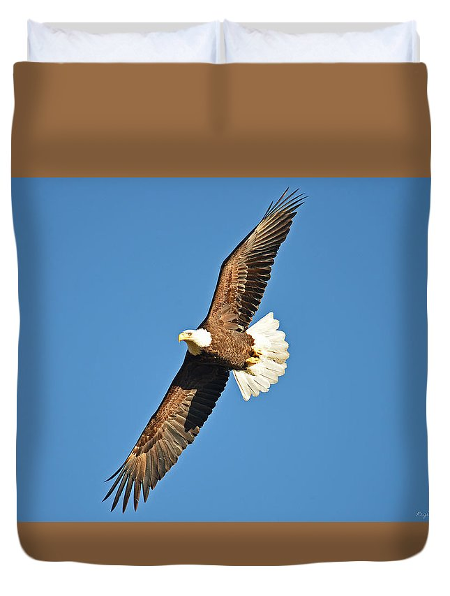 Bald Eagle Duvet Cover featuring the photograph Free Flying by Regine Brindle