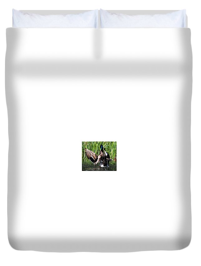 Ducks Duvet Cover featuring the photograph Freeze Mr by Taylor Howe