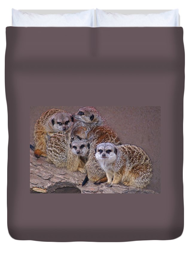 Mer Cats Duvet Cover featuring the photograph Freezing Meer Cats by Heather Coen