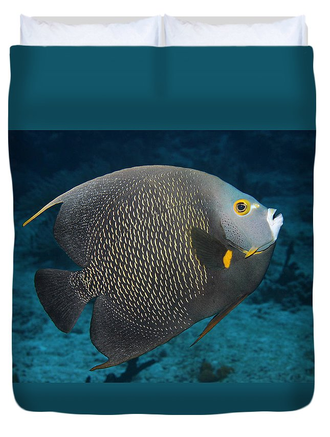 Fish Duvet Cover featuring the photograph French Angelfish by Edelberto Cabrera
