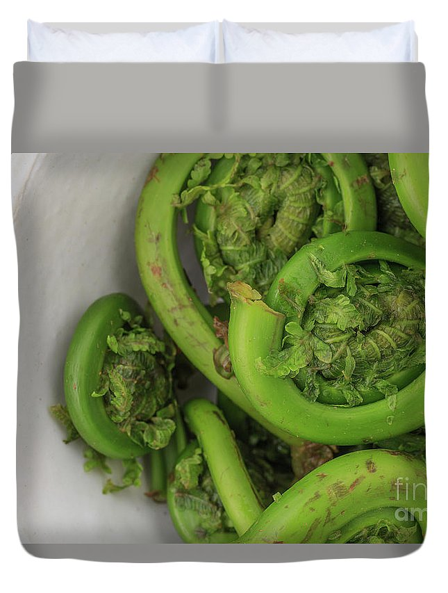 Fiddleheads Duvet Cover featuring the photograph Fresh Picked Fiddle Heads by Edward Fielding