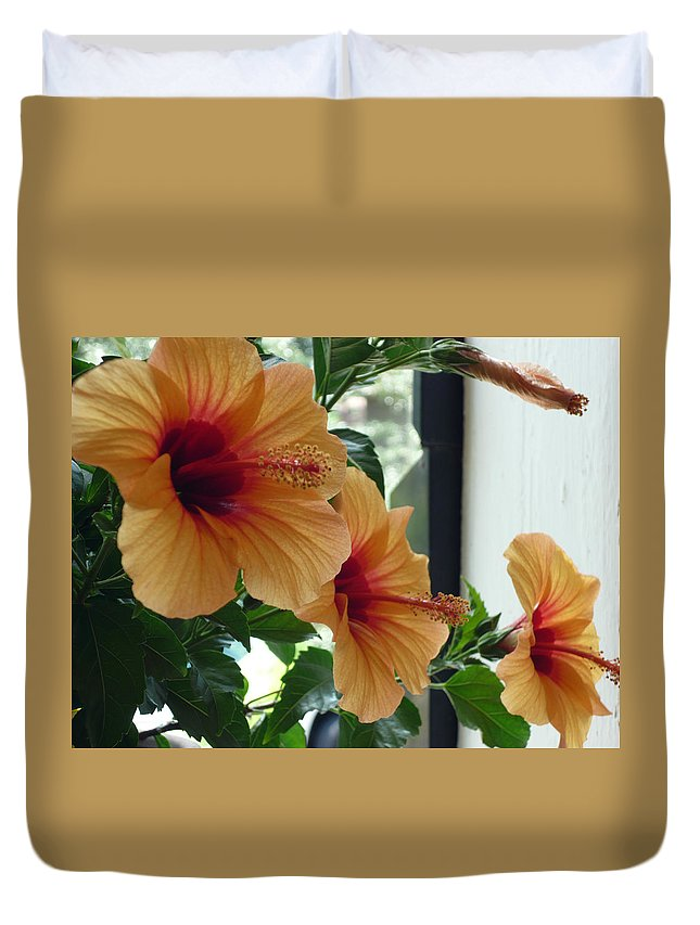 Photography Flower Floral Bloom Hibiscus Peach Duvet Cover featuring the photograph Friends For A Day by Karin Dawn Kelshall- Best