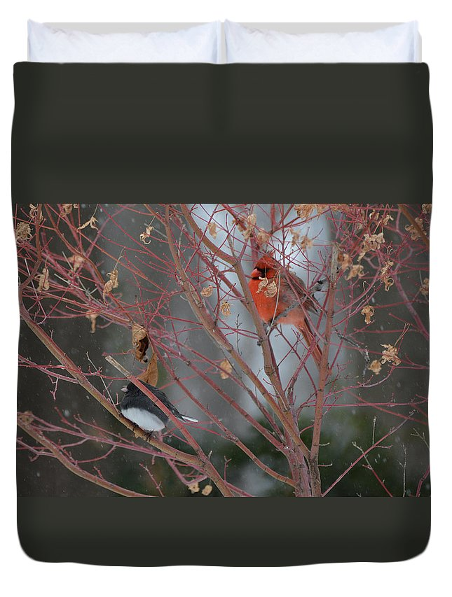 Bird Duvet Cover featuring the photograph Friends Of A Feather by Bill Helman