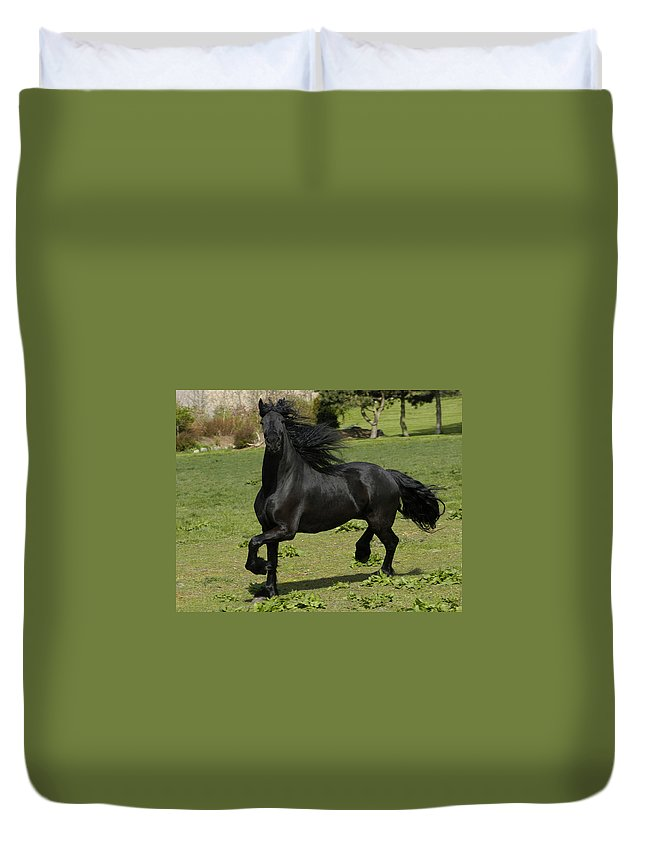 Friesian Duvet Cover featuring the photograph Friesian Horse In Galop by Michael Mogensen
