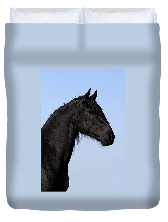 Friesian Duvet Cover featuring the photograph Friesian Stallion by Michael Mogensen